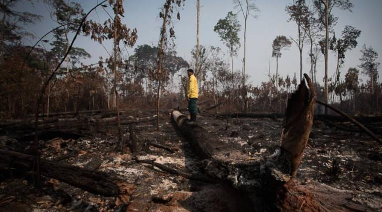 Sembrando Vida Se ha convertido en un programa de deforestación