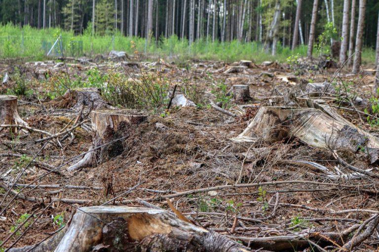 tala ilegal de bosques crimen organizado